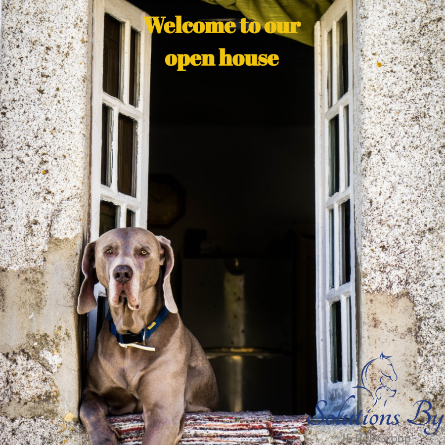 Three Key Points to Consider For Holding An Open House At Your Veterinary Hospital